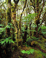 Kamakou Nature preserve, Native rainforest,Molokai
