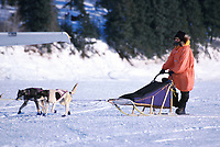 D Swingley Arriving in White Mtn 2000 Iditarod AK