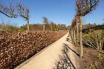 Garden designed by Piet Oudolf at Scampston Hall, Yorkshire, England, UK - Plantsman's Walk