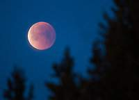 "The ""blood moon"" begins to set at the tail end of the lunar eclipse on January 31st."