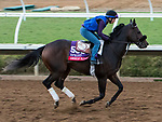 DEL MAR, CA - NOVEMBER 02: American Pastime, owned by Judy Huarte, Mike Mowrey, Gary Woods, Burt Lane & Jane Steeper and trained by Robert B. Hess Jr., exercises in preparation for TwinSpires Breeders' Cup Sprint at Del Mar Thoroughbred Club on November 2, 2017 in Del Mar, California. (Photo by Sue Kawczynski/Eclipse Sportswire/Breeders Cup)