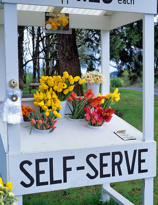 Roadside flower stand near Corvallis, Oregon.