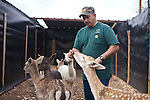 Anthony Matone, owner of Wa-To-Go Exotics, has european white tail deer in a habitat he built on his nearly 250-acre ranch near Mountain Home, Texas. Although Matone lives 39-miles from the nearest town, he no longer has a mountain lion because it is considered dangerous. ..Ben Sklar