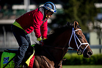 LOUISVILLE, KY - MAY 02: State of Honor gallops at Churchill Downs on May 02, 2017 in Louisville, Kentucky. (Photo by Alex Evers/Eclipse Sportswire/Getty Images)