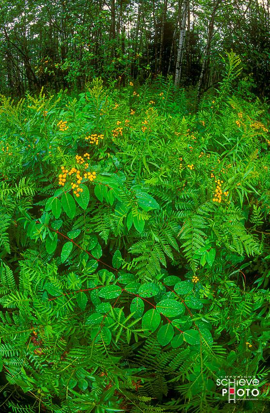 Wildflowers in northern Wisconsin.