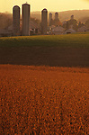 PA Landscapes, Wheat Fields and Farm, Perry Co., Pennsylvania