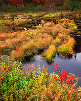 Bog near the Raquette River; Adirondack Park and Preserve, NY