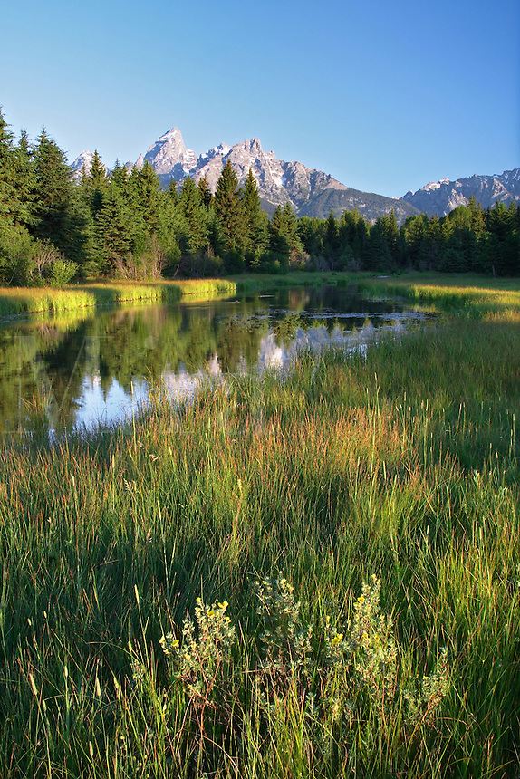 Grassy meadow with Teton Mountains reflected in backwater pool of the Snake River at sunrise, Schwabacher Landing, Grand Teton National Park, Teton County, Wyoming, USA