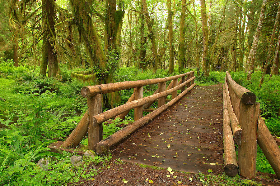 Trail over wooden bridge through rain forest on Maple Glade Rain Forest Trail, Quinault Rain Forest, Olympic National Park, Olympic Peninsula, Grays Harbor County, Washington, USA