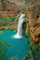 Fremont cottonwoods and Havasu Falls<br />