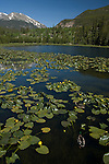 Cub Lake, Stones Peak, Rocky Mountains, landscape, yellow pondlilies, lily pads, Rocky Mountain National Park, spring, morning, Colorado, USA.