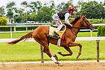 JUNE 05, 2019 : Sir Winston morning workouts for Belmont Stakes contenders at Belmont Park, on June 5, 2019 in Elmont, NY.  Sue Kawczynski_ESW_CSM