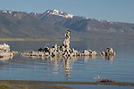 osprey on tufa tower at Mono Lake