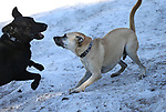 Dogs play in the snow along the Woods Lake trail near Kirkwood, Ca., on Saturday, Oct. 7, 2017. <br />Photo by Cathleen Allison/Nevada Momentum