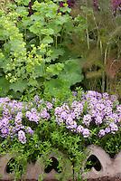 Thymus 'Jekka' + Foeniculum vulgare 'Purpureum' aka 'Rubrum' (Red Fennel) + Alchemilla lady's mantle