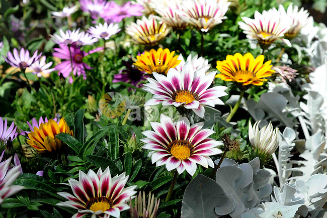 A general view shows the spring flower exhibition at Orman Botanical Garden in Giza, Egypt, on March 19, 2016. Photo by Amr Sayed