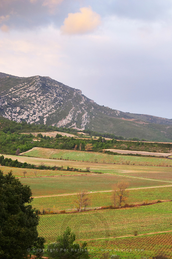 Chateau Pech-Latt. Near Ribaute. Les Corbieres. Languedoc. The vineyard. France. Europe. Mountains in the background.