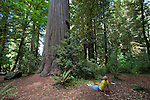 Redwood trees, Jedediah Smith Redwoods State Park, Stout Grove, Northern California, Sequoia sempervirens, endangered species,