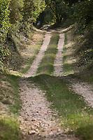 Europe/France/Midi-Pyrénées/46/Lot/Env Fontanes-du-Causse: Sur le circuit de la Forêt de la Braunhie au Font de Lavadoux