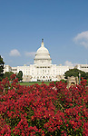 Washington DC; USA:  The Capitol Building, legislative center of the US government, with red flowers.Photo copyright Lee Foster Photo # 3-washdc83158