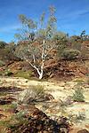 Gorge Country,Mutawinji NP,Broken Hill NSW