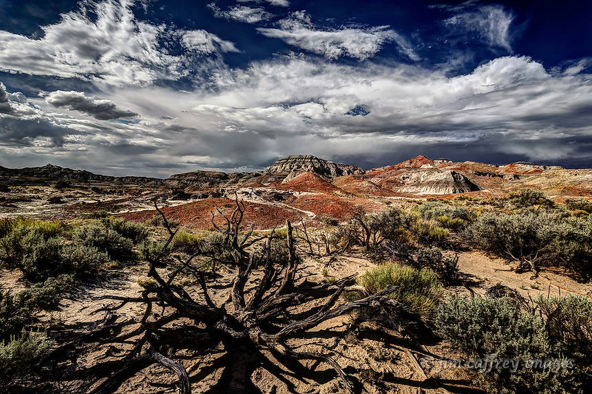 Remains of an old dead juniper tree witheroded multi-colored hills in the distance, all under a cloudy sky.