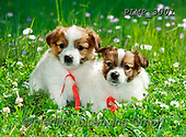 Marek, ANIMALS, REALISTISCHE TIERE, ANIMALES REALISTICOS, dogs, photos+++++,PLMP3001,#a#, EVERYDAY