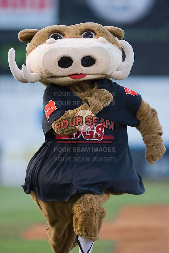 "Winston-Salem Warthogs mascot ""Wally the Warthog"" races towards home plate at Ernie Shore Field in Winston-Salem, NC, Thursday July 27, 2008. (Photo by Brian Westerholt / Four Seam Images)"