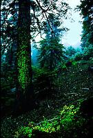 FOREST IN CLOUDS BIG OAKS RIDGE SAN GORGONIO WILDERNESS