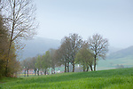 Europa, DEU, Deutschland, Hessen, Landkreis Fulda, Großenlueder, Luetterz, Typische Landschaft, Baeume, Regen, Dunst, Regenwetter, Kategorien und Themen, Natur, Umwelt, Landschaft, Jahreszeiten, Stimmungen, Landschaftsfotografie, Landschaften, Landschaftsphoto, Landschaftsphotographie, Wetter, Wetterelemente, Wetterlage, Wetterkunde, Witterung, Witterungsbedingungen, Wettererscheinungen, Meteorologie, Wettervorhersage<br /> <br /> [Fuer die Nutzung gelten die jeweils gueltigen Allgemeinen Liefer-und Geschaeftsbedingungen. Nutzung nur gegen Verwendungsmeldung und Nachweis. Download der AGB unter http://www.image-box.com oder werden auf Anfrage zugesendet. Freigabe ist vorher erforderlich. Jede Nutzung des Fotos ist honorarpflichtig gemaess derzeit gueltiger MFM Liste - Kontakt, Uwe Schmid-Fotografie, Duisburg, Tel. (+49).2065.677997, ..archiv@image-box.com, www.image-box.com]