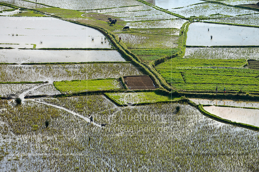 MADAGASCAR, highlands, rice cultivation, rain flooded paddy fields / MADAGASKAR, bewaesserte Reisfelder im Hochland bei Ambositra