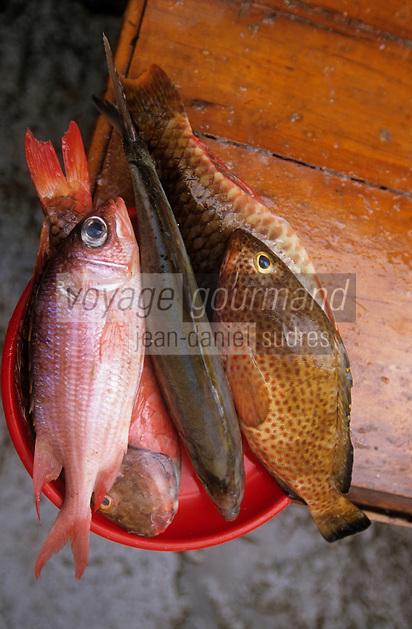 Europe/France/DOM/Antilles/Petites Antilles/Guadeloupe/Pointe-à-Pitre : Marché de Bergevin - Etal de poissons