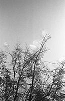 Alto rio Xié, fronteira do Brasil com a Colômbia a cerca de 1.000Km oeste de Manaus.<br />06/2002.<br />Foto: Paulo Santos/Interfoto Expedição Werekena do Xié<br /> <br /> Os índios Baré e Werekena (ou Warekena) vivem principalmente ao longo do Rio Xié e alto curso do Rio Negro, para onde grande parte deles migrou compulsoriamente em razão do contato com os não-índios, cuja história foi marcada pela violência e a exploração do trabalho extrativista. Oriundos da família lingüística aruak, hoje falam uma língua franca, o nheengatu, difundida pelos carmelitas no período colonial. Integram a área cultural conhecida como Noroeste Amazônico. (ISA)