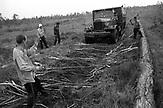 Preiselbeer-Ernte, Ukraine, 2003-2004. / Cranberry crop, Ukraine, 2003-2004.