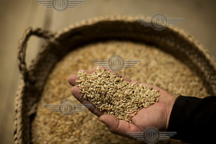 Rafael Margalef with a handful of rice in his rice mill at Deltebre.