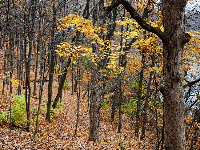 The DuPage River Valley shed its autumn coating of leaves, Hammel Woods Forest Preserve, Will County, Illinois