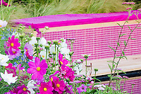 Cosmos Sonata annual flowers in pink and white, blue Agapanthus summer bulbs, ornamental grass, garden bench in matching colors and harmony for pretty landscaping in pink with touches of blue