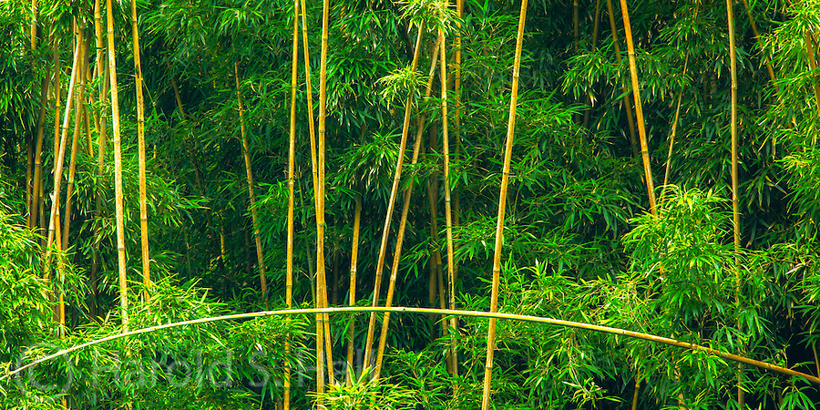 The road to Hana in Maui, Hawaii is full of twists and tight turns.  Rounding the corner of one of these many turns, I saw this hillside of bamboo with these geometric designs.