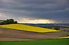 dunkelgraue Regenwolken über gelb blühendem Rapsfeld und Windrädern