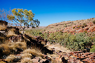Image Ref: CA519<br />