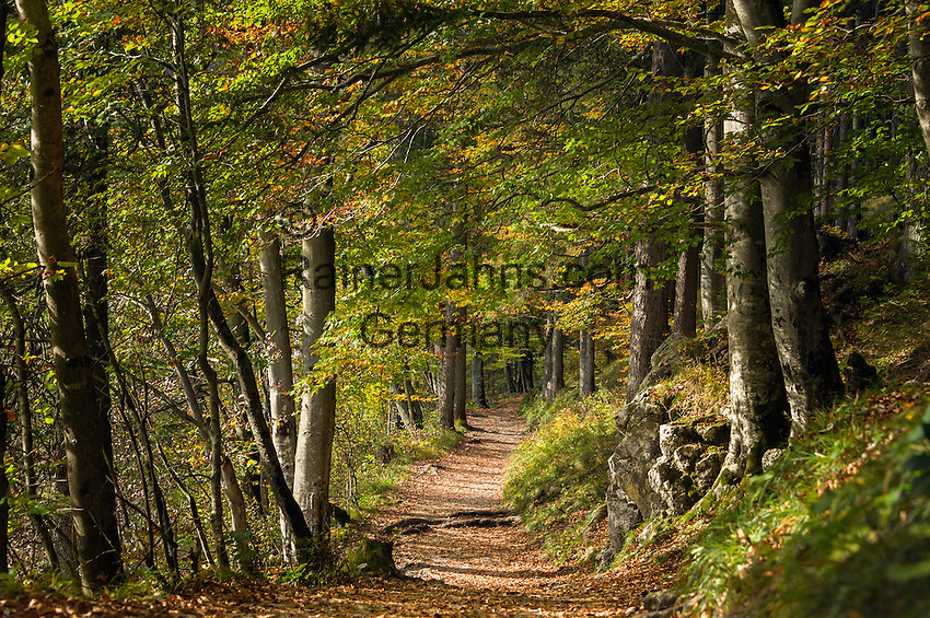 Austria; Styria; Lake Leopoldsteinersee: hiking trail around the lake in autumn colours | Oesterreich, Steiermark, Wanderweg um den Leopoldsteinersee im Herbst