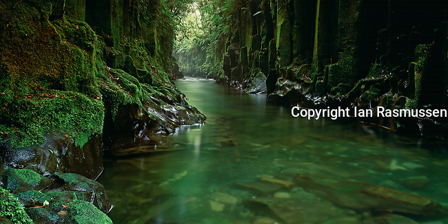 The stunning Whirinaki river flowing through Te Whaiti Nui-A-Toi Canyon and pristine virgin Rainforest Central North Island of New Zealand