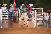 SEBRA - Chesterfield, VA - 8.30.2014 - Bulls & Action