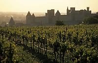Europe/France/Languedoc-Roussillon/11/Aude/Carcassonne: La cité et le vignoble