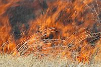 Raging bush fire up close