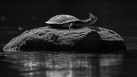 A turtle and friend in the Cristalino River.