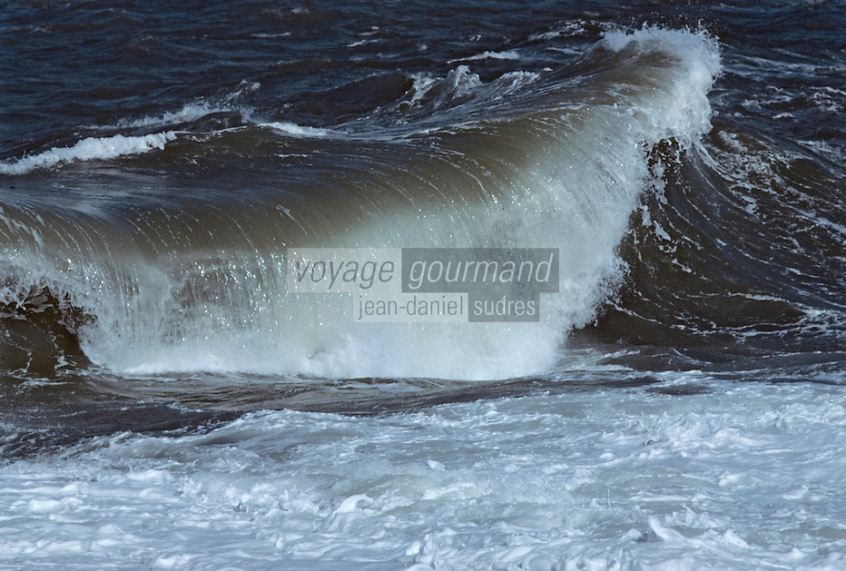 Europe/France/Bretagne/56/Morbihan/Presqu'île de Quiberon: La côte sauvage
