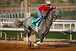 RIYADH,SAUDI ARABIA-FEB 27: Tacitus excercises for Saudi Cup at King Abdulaziz Racetrack on February 28,2020 in Riyadh,Saudi Arabia. Kaz Ishida/Eclipse Sportswire/CSM