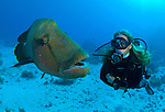 Napolean wrasse and diver in Ras Mohammed National Park