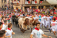 Europe,Spain,Pamplona,San Firmin festival 2018, Encierro, 8 am the bulls run to the plaza de Toros, at the end of track